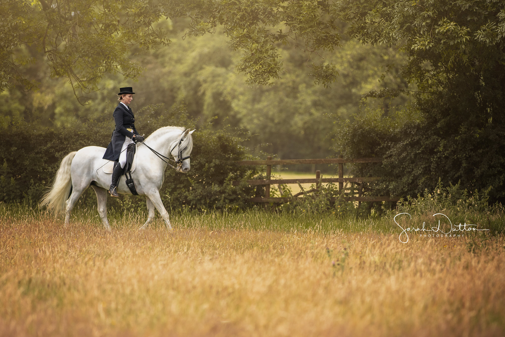 Horse outdoor and indoor portrait photography in Whitchurch Hampshire