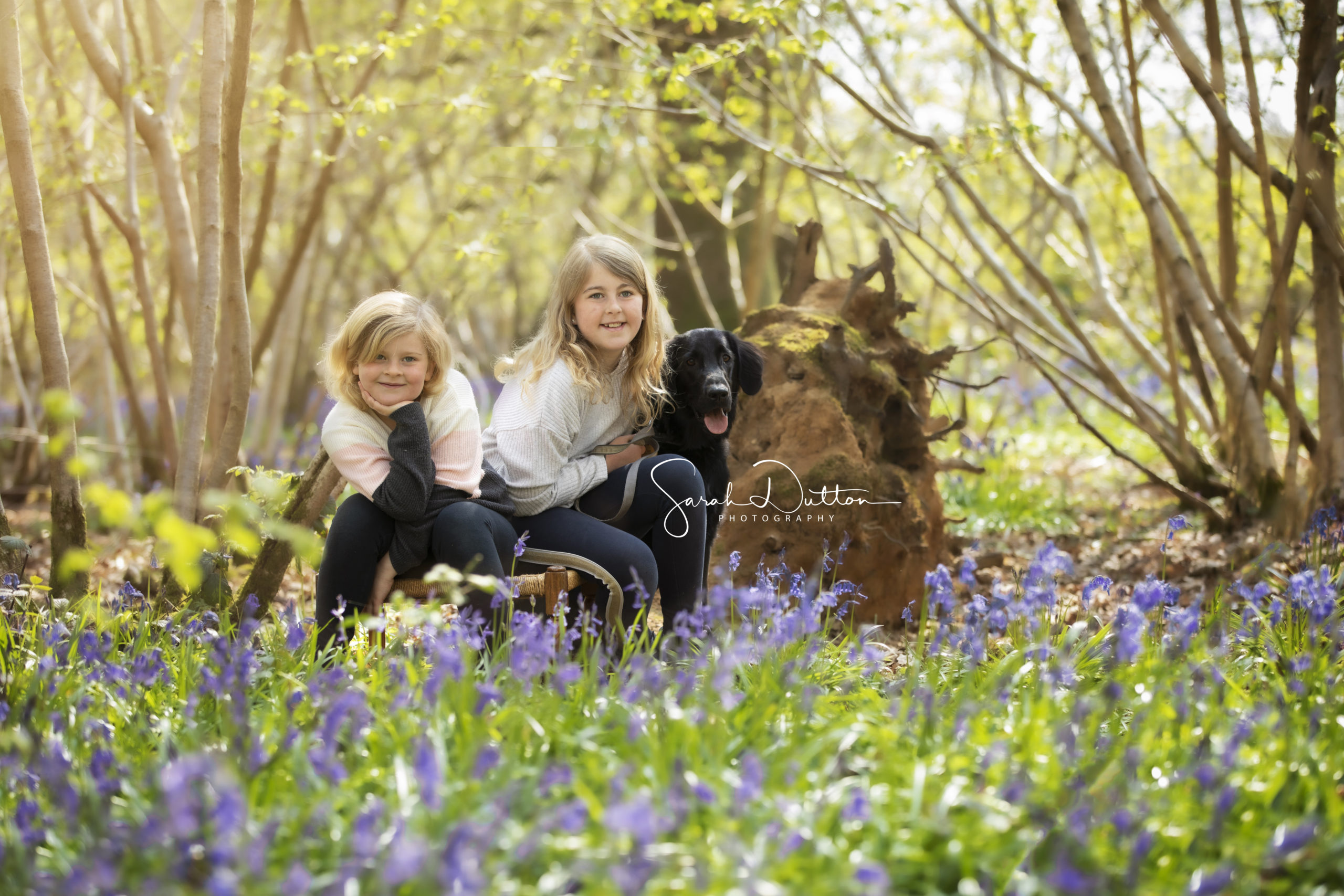 Family photoshoot taken in the Bluebell woods by a professional photographer in Basingstoke Hamsphire